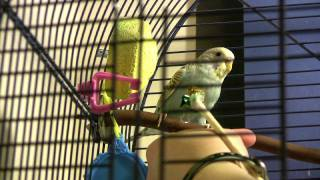 Parakeet Target Training Part 2