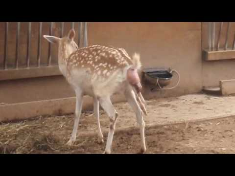 Deer Birth Experience