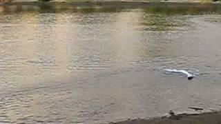 Brushless Self-righting RC Speedboat 1