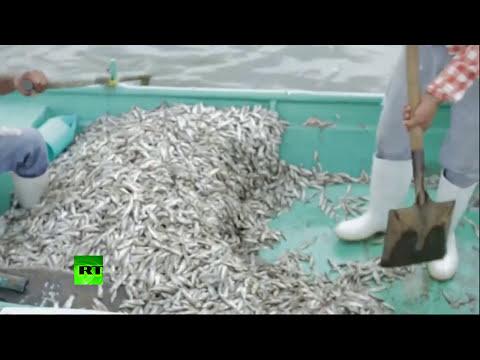 Video: Aparecen más de 50 toneladas de peces muertos en una laguna de México