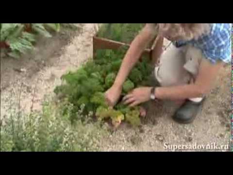 Натуральное удобрение из крапивы