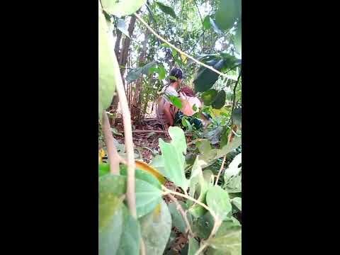 Orang lagi Mesum di hutan sepasang suami istri. Hot G thumbnail