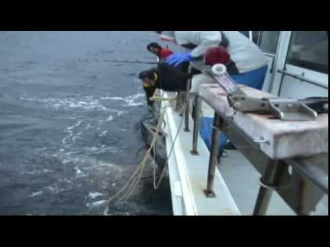 Japanese Tuna Fishing