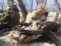 Охота на гуся 2018 с чудо-псом гусятником. Часть 1