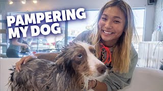 Pampering My Dog Reese!! | Chloe Kim