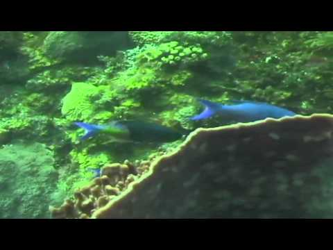 Underwater Explorer - Honduras