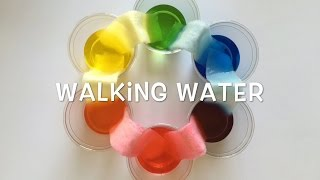 Walking Water - Science Project For Kids