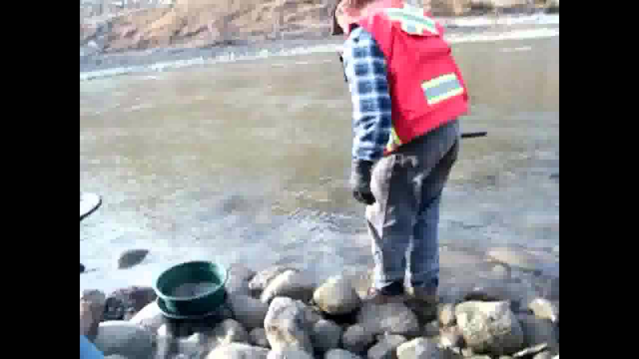 Panning Gold in Rivers Gold Panning Fraser River in
