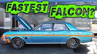 Worlds Fastest Falcon? - Nearly 200mph!