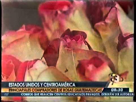 Agexport   EEUU y Centroamérica principales compradores de rosas guatemaltecas TD 0830 120215