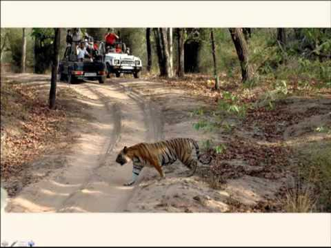 Wildlife Safaris in Incredible India - information webinar