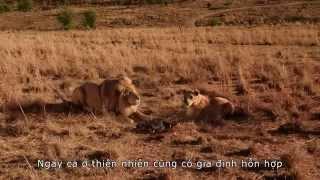 'Blended' - phim gia đình quảng bá du lịch Nam Phi