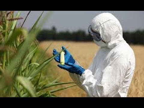 HEALTH CRISIS:Monsanto GM Foods The Next EPIDEMIC for AMERICA ?