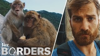 The only wild monkeys in Europe