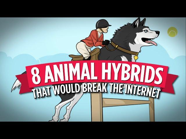 8 Animal Hybrids That Would Break The Internet