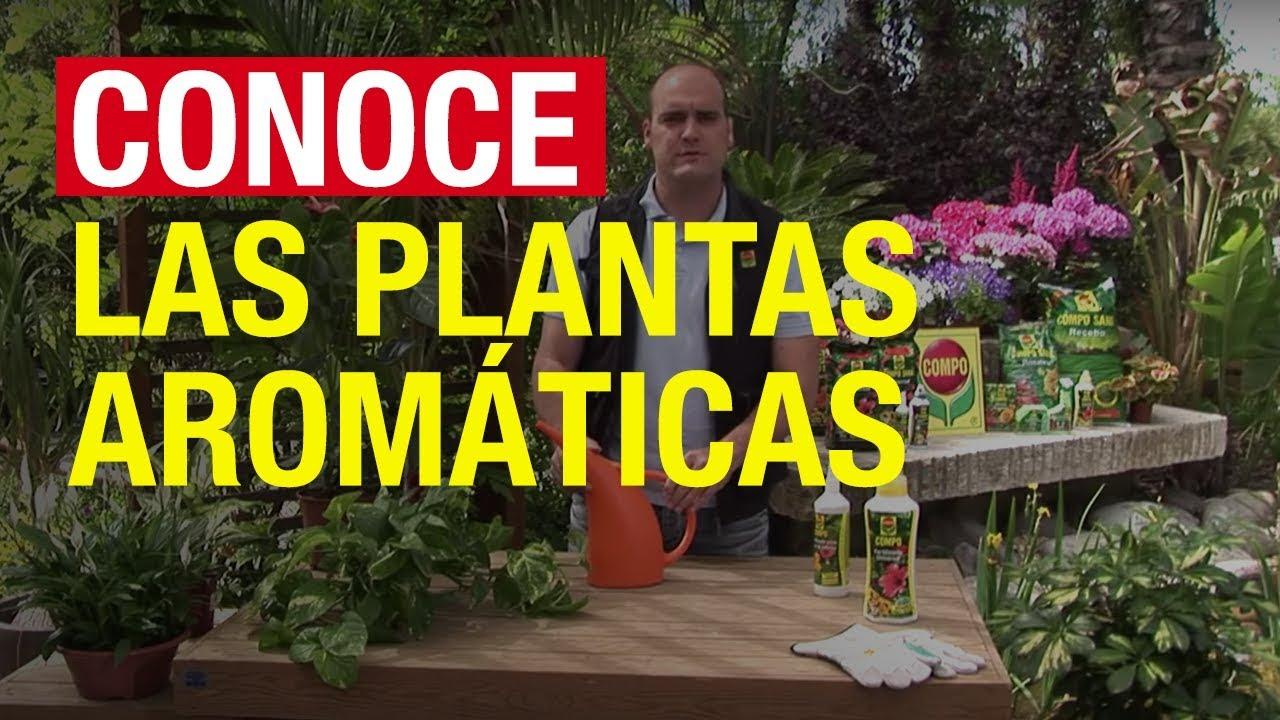 Plantas arom ticas conceptos generales compo jardiner a for Jardinera plantas aromaticas