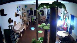 The Cat Cafe Live Stream