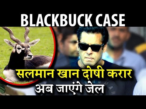 Big Breaking : Salman Khan Is Guilty In Black Buck Case