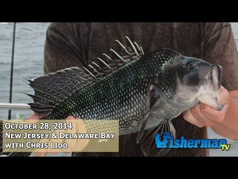 October 28, 2014 New Jersey/Delaware Bay Fishing Report with Chris Lido