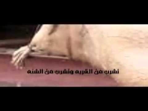يامل قلب بنات البدو تلنه - ممدوح الدعجاني