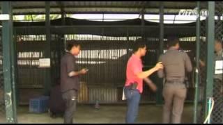 VTC14_Thái Lan điều tra vụ hơn 1.000 động vật hoang dã tại Bangkok_11.06.2013