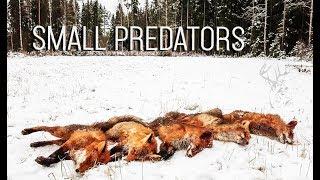 NH: Pienpedot 2016    Predator hunting in Finland