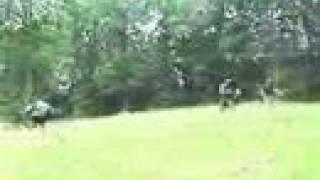 Mag 7 Paintball (part 1 of 3) Woodland Scenario