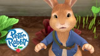 Peter Rabbit - The Great Garden Adventure | Cartoons for Kids