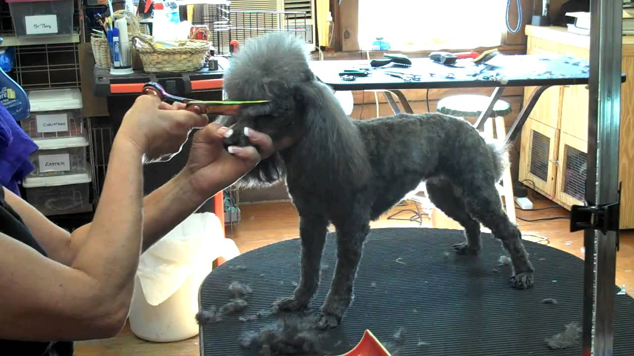 Dog Grooming Columbia Sc