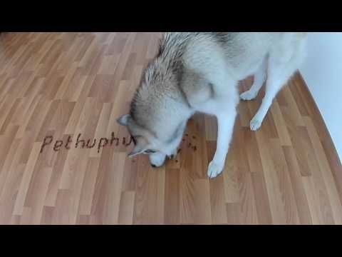 record my wolfdog writing your message