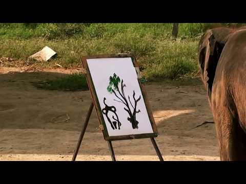 Panting Elephant in Thailand | HD