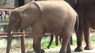 Samson the Elephant Turns 4