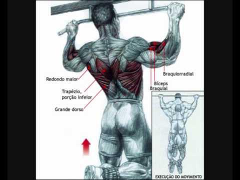 Trapezio musculo