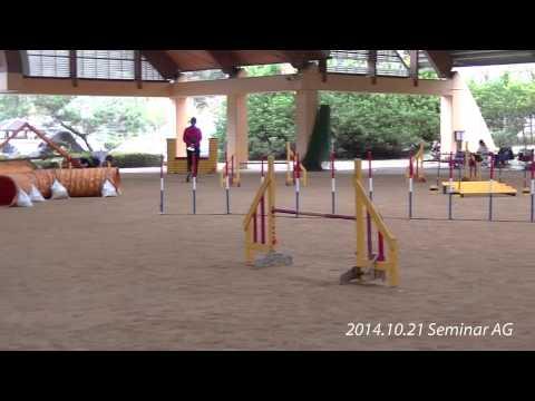 2014.10.19-20 Gifu Club & Seminar(Tamás Tráj)