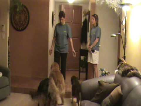 Door Dashing Pt 2: Dog Training Tips from Villa La PAWS, Phoenix AZ