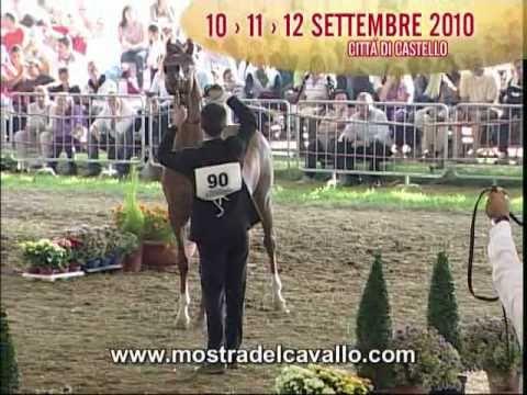 44^ Mostra Nazionale del cavallo di Città di Castello
