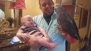 Best BABIES LAUGHING at ANIMALS!   CAUTION; Extremely funny compilation!