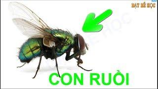 Dạy bé học côn trùng | Bé nhận biết các loài côn trùng xung quanh nhanh nhất | Bài 157