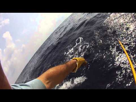Skipjack tuna off Hatteras