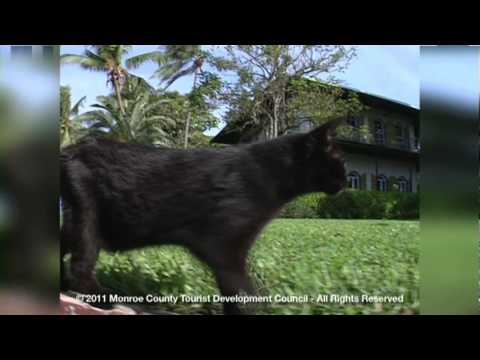 The Cats at Key West's Ernest Hemingway Home & Museum