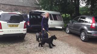 RV Dog Trainer | 4 years of nonsense reversed in 5 minutes of training