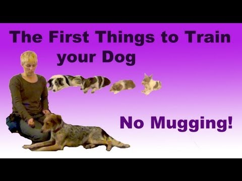0 The most important things to train your dog  No Mugging!