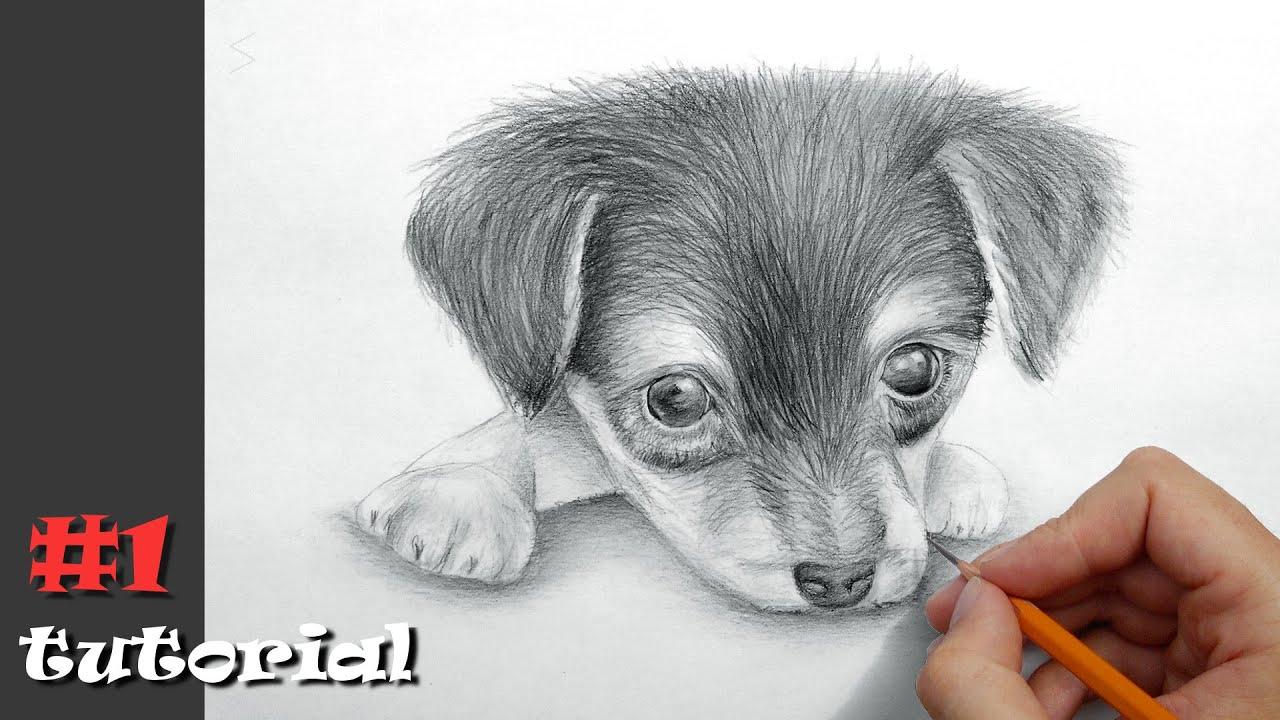 Видео рисуем собак карандашом