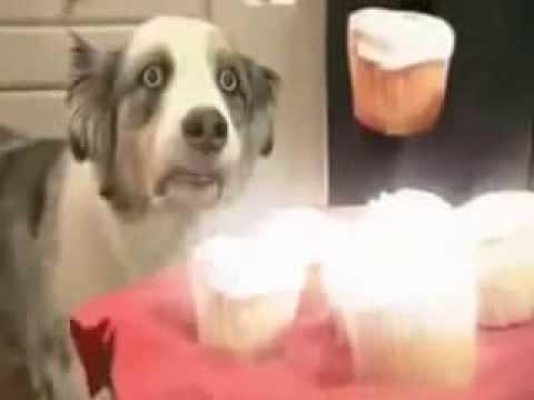Собака под гипнозом! Юмор! Приколы! Смех