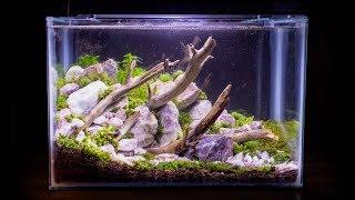 Terrestrial Moss Nano Aquarium
