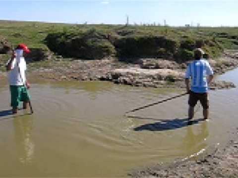 caza de carpas con arpon  parte 5