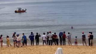 Cá VOI (cá Ông)  - ngày 26-6-2016 tại tp Quy Nhơn, Bình Định