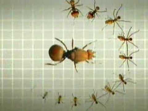 Hormigas trabajando youtube - Casa de hormigas ...
