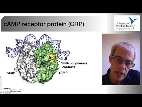 03 The Regulation of Gene Expression in Bacteria