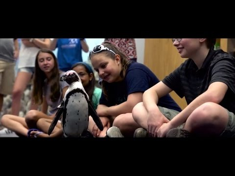 Injured Penguin Can Waddle Again After Kids Help Make Custom Bootie